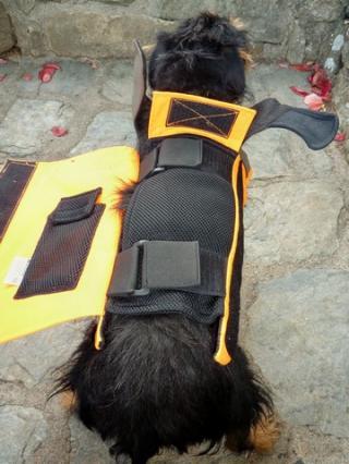 jagdterrier le forum :: les gilets de protection en kevlar