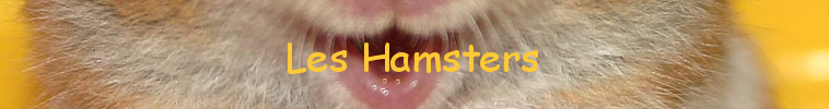 hamsters Forum Index