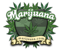 marijuana Index du Forum