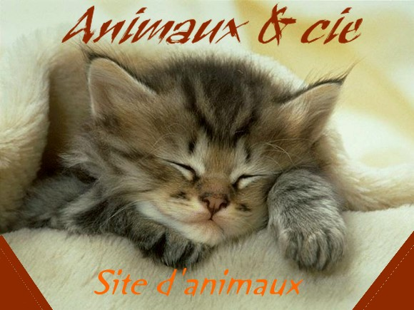 Animaux & cie Index du Forum
