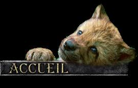 les-loups-sauvages Index du Forum