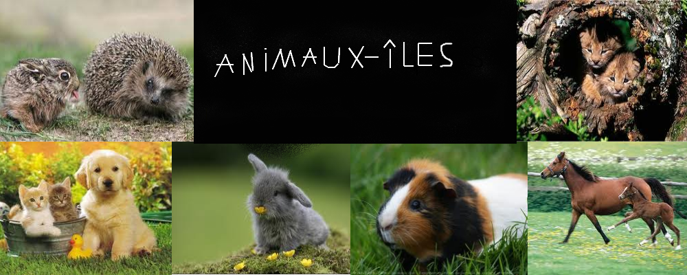 Animaux-îles Index du Forum