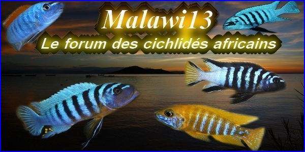 Malawi13 Index du Forum