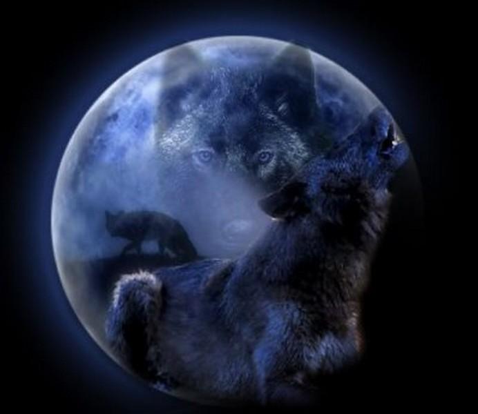 l'ordre des loups Index du Forum