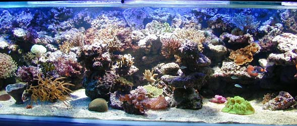 www.aquacentergary.eu Index du Forum