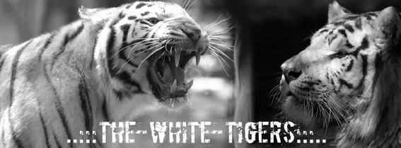The-White-Tigers Index du Forum