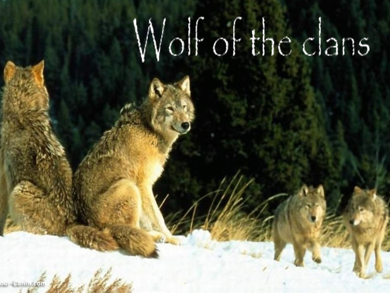 wolf of the clans Index du Forum