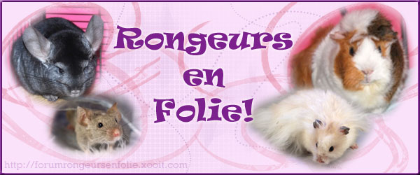 Forum Rongeurs en Folie ! Index du Forum