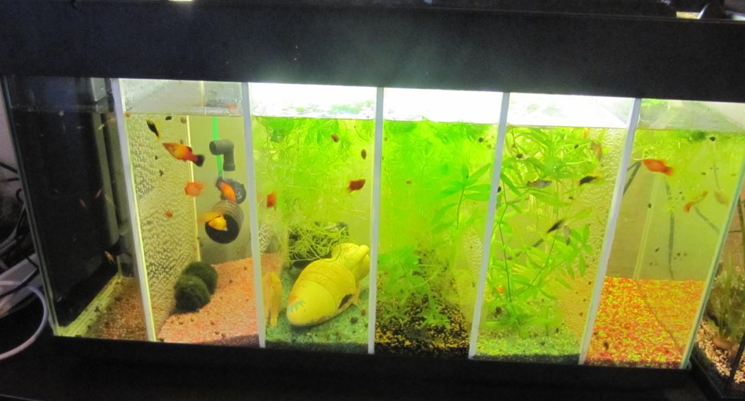 Mon instalation provisoire for Bac hopital poisson