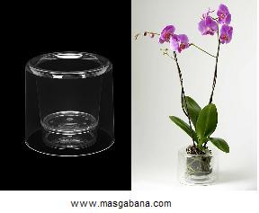 forum orchid es nature cache pot orchid e transparent. Black Bedroom Furniture Sets. Home Design Ideas