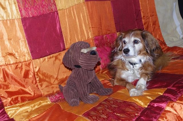 le forum chasse et chien chien d 39 appartement. Black Bedroom Furniture Sets. Home Design Ideas