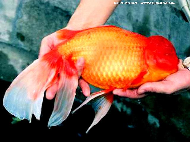 Pecheurs unis de lille urgent place dans l 39 aquarium for Acheter poisson rouge lille