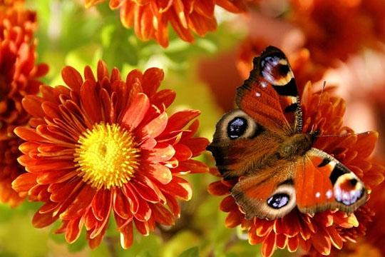 Nos amours de plumes et de poils les saisons en textes for Fleurs automne