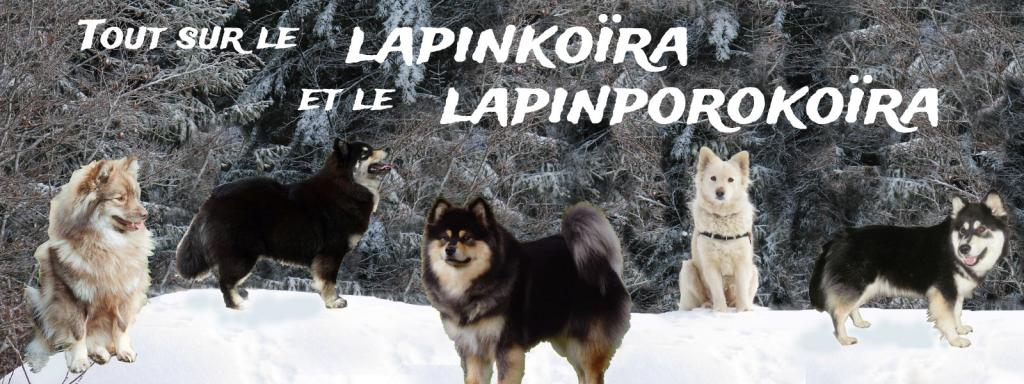 tout sur le lapinkoïra et le lapinporokoïra Index du Forum