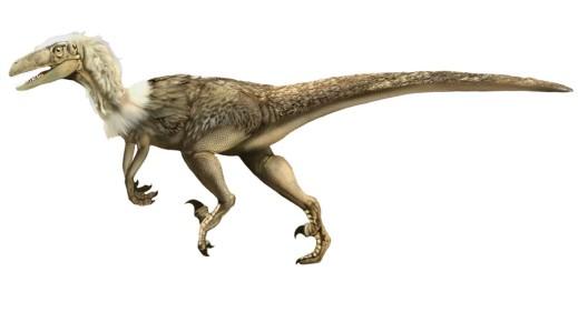 le velociraptor est un dinosaure ayant vcu au crtac en asie dans lactuel mongolie il mesurer a peine 50 centimtre de haut et un mre de long ce qui ne