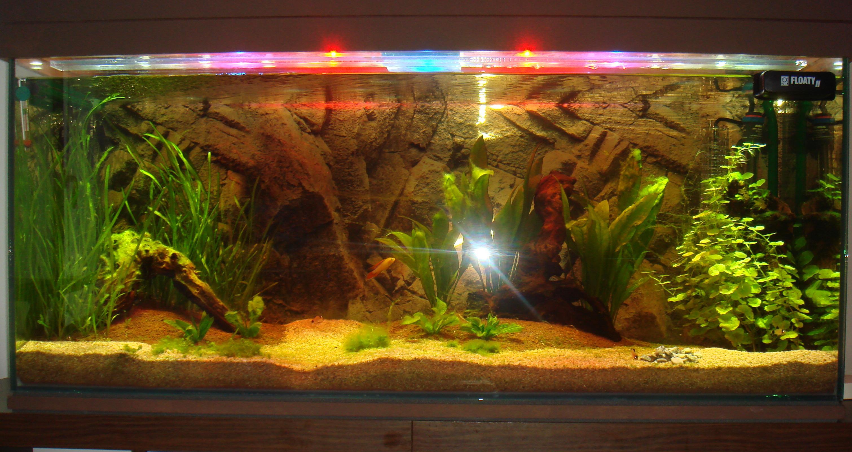 aquarium eau douce eclairage led