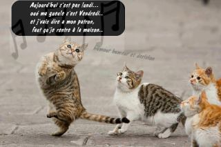 Chat rencontre 33