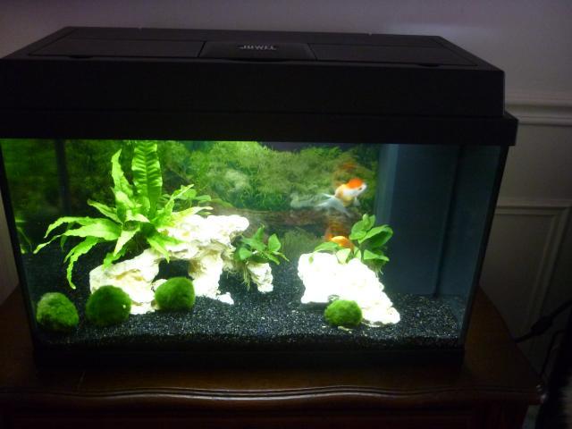 décoration aquarium poisson japonais