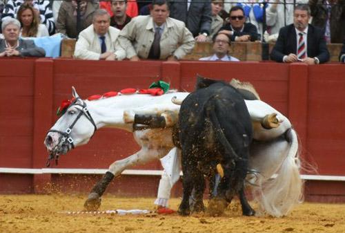 Tout en crins forum cheval et quitation les corridas - Comment dessiner un cheval au galop ...