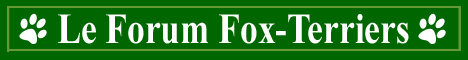 Le forum des fox-terriers Index du Forum