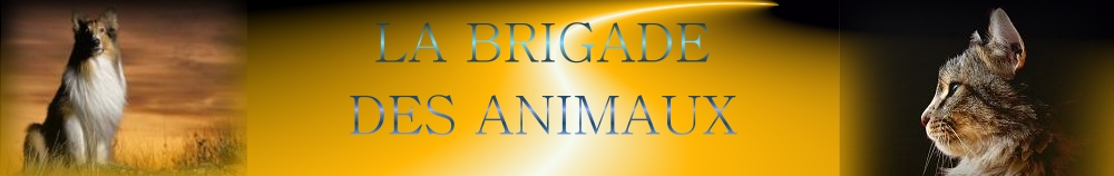 LA BRIGADE DES ANIMAUX Forum Index
