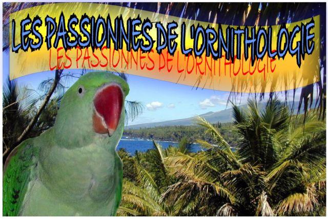 FORUM LES PASSIONNES DE L'ORNITHOLOGIE Index du Forum