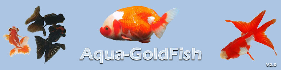 Aqua-GoldFish Index du Forum