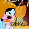 Complètement Dingo.