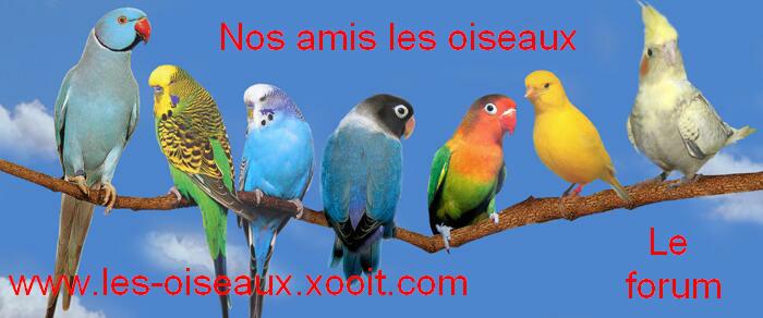 les oiseaux Index du Forum