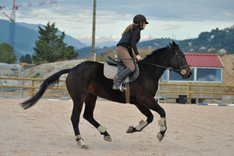 photo cheval monte