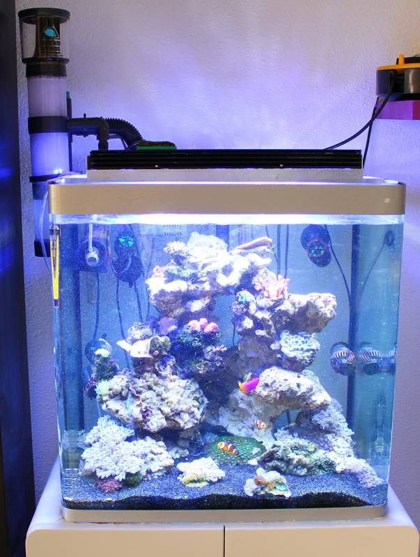 Aquarium eau de mer 80l for Achat aquarium eau de mer