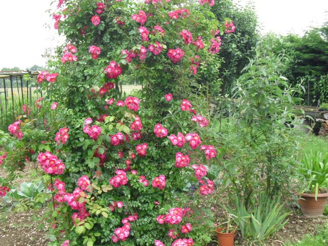 tout les fleur du jardin