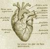 Les HUMAINS : Culture et Civilisation Coeur-arc-36f146d