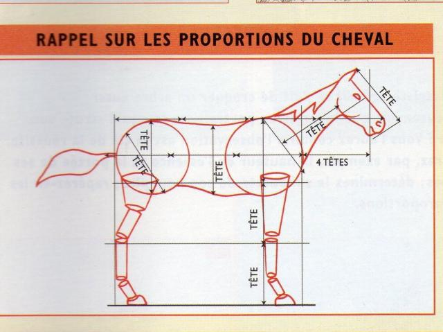 dessin cheval proportions
