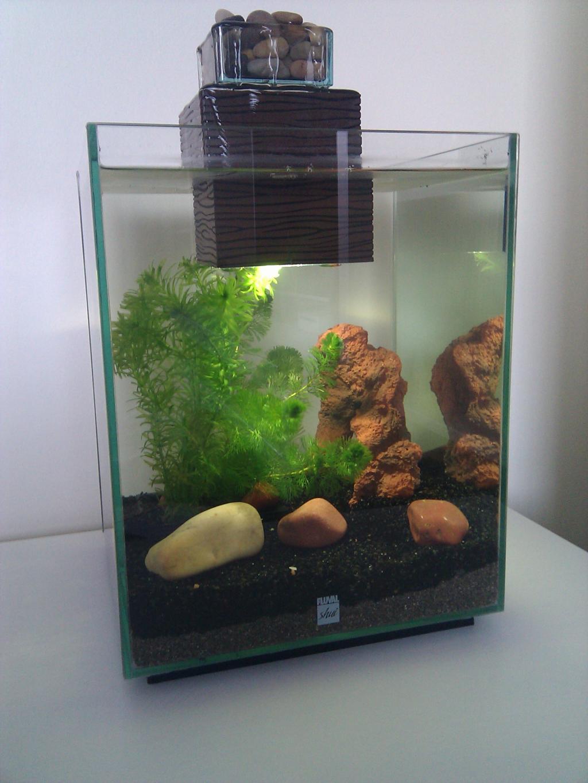 Hors ligne for Jardiland aquarium