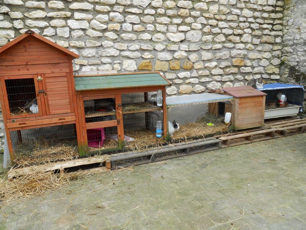 Cabane pour lapin for Cabane a lapin exterieur