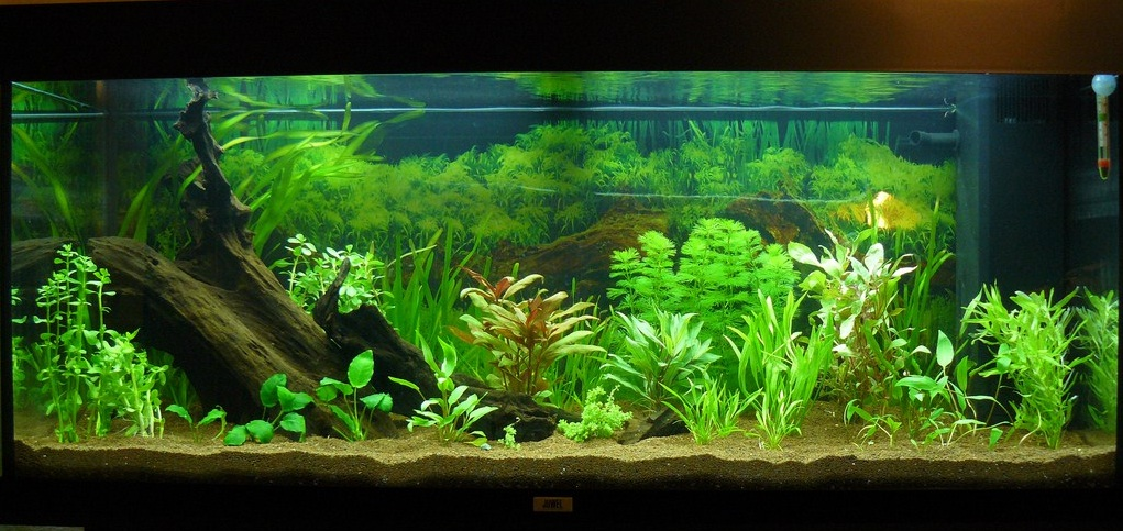 Aquarium eau douce plantes 28 images plante aquarium for Plante aquarium eau douce