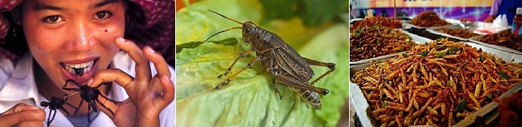 Le forum des Entomovores Index du Forum