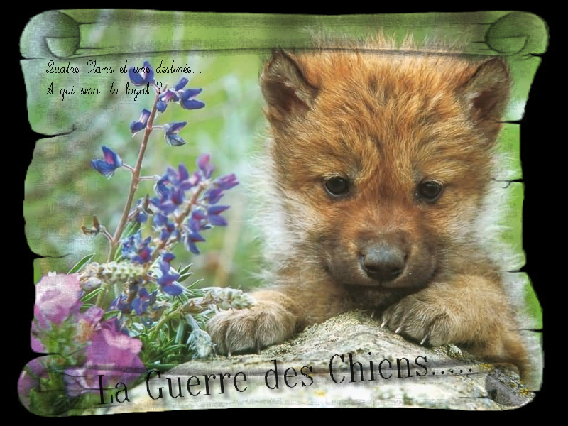 la guerre des clans version chiens Index du Forum