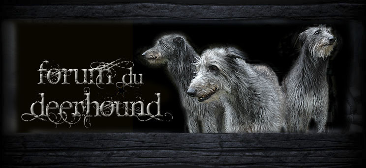 Forum du Deerhound Index du Forum