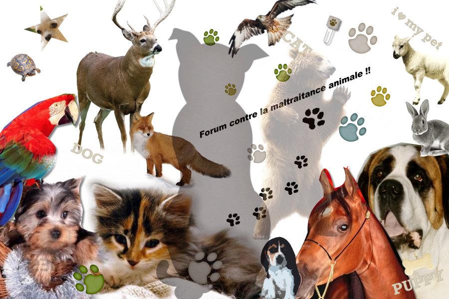 stop aux maltraitances sur les animaux Index du Forum