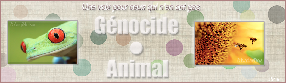 Genocide•Animal Index du Forum