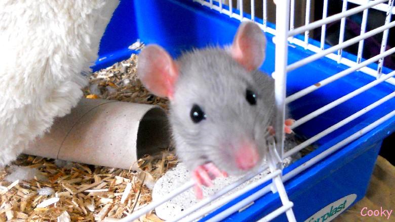 i love rats Index du Forum
