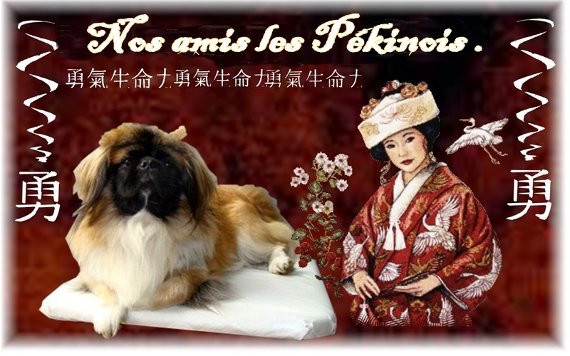 nos amis les pekinois Forum Index