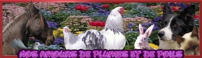 Nos Amours de Plumes et de Poils Forum Index