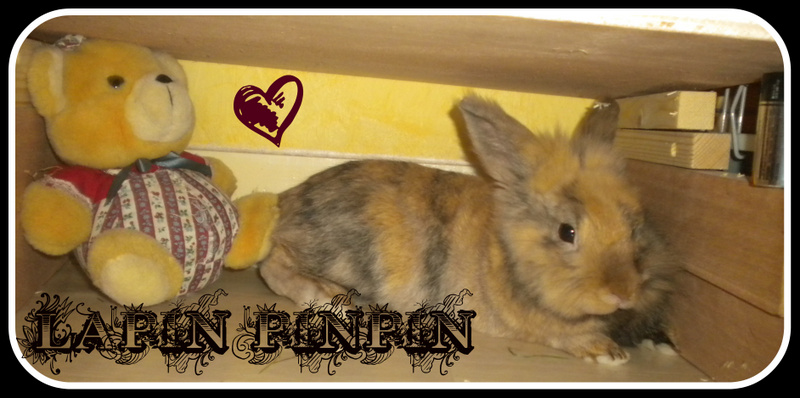 lapin-pinpin Index du Forum