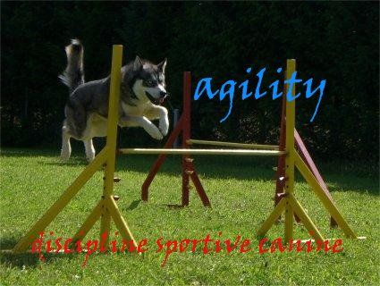 agility Index du Forum