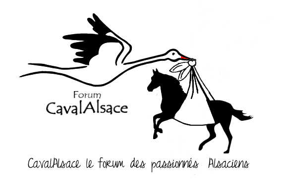 cavalalsace Index du Forum