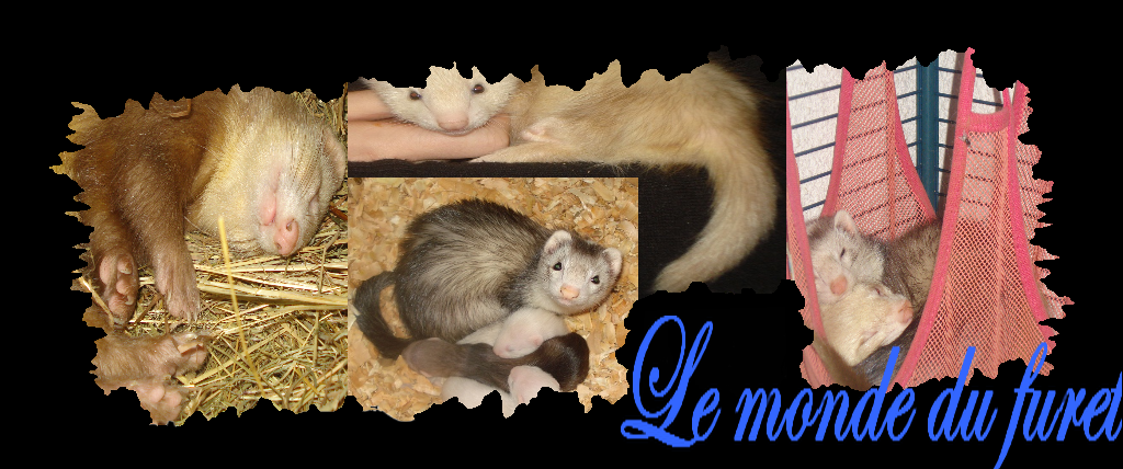 le monde du furet Index du Forum
