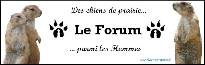 Le forum des chiens de prairie (cdp) Index du Forum